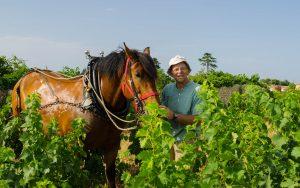 Frédéric NODET et son cheval de trait Mézenc. Photo © Alain Marquina