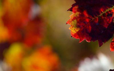 De belles couleurs mordorées